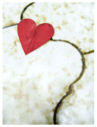 20060111082111-cuore4tj.jpg