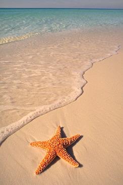 20061122083306-starfish1.jpg