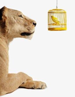 20060612081047-lioness-canary.jpg