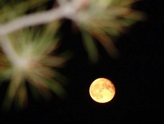 Nocturno_Darane..jpg