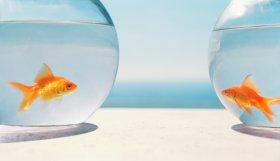 peixos.jpg